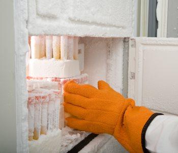 freeze sperm